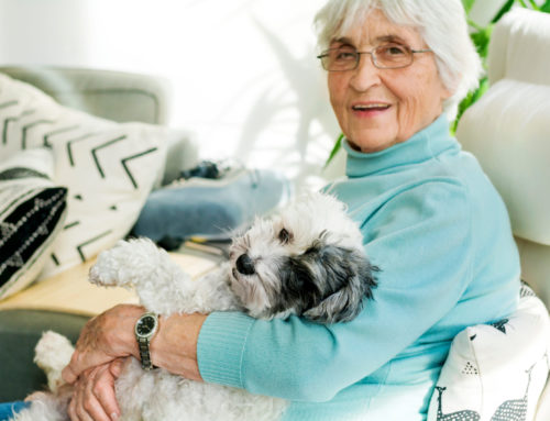 Adopting Pet Companions for Seniors